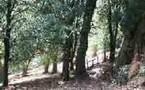 Le sentier sous les Châtaigniers.